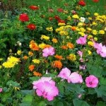 Planting Your Own Garden of Dreams