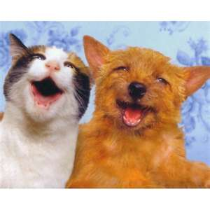 Smiling Dog And Cat Smiling Dog And Cat