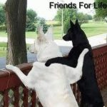 Friendship…Your Timeless Treasure