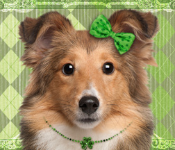 eCard of the week   Fine Irish Lassie