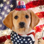"eCard of the Week: ""America Furever"" Talking Card"