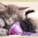 CAT ADOPTION & HUG YOUR CAT DAY
