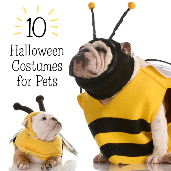 10 Halloween Costumes for Pets  sc 1 st  Blue Mountain & Top 10 Halloween Costumes for Pets | Blue Mountain Blog