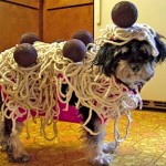 Spaghetti-and-meatballs-costume