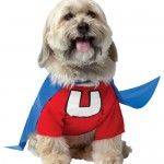 10 Halloween Costumes for Pets