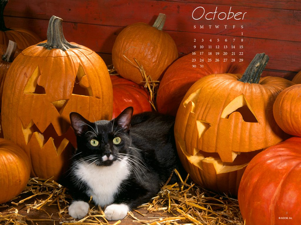 Cat with Pumpkin_1024x768