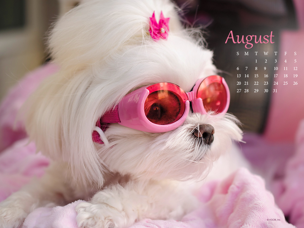 Every Month Brings Its Own Unique Holidays To Celebrate, And August Is No  Different. Did You Know That Month Long Holidays This Month Include Family  Fun ...